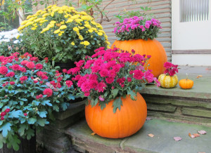 pumpkin_planter_DIY_2