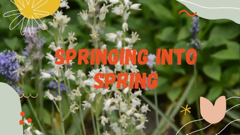 Spring Events in the Grand Strand